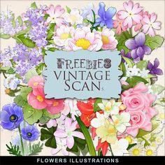 Freebies Kit de Flores Ilustraciones