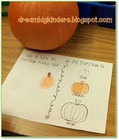 Draw a picture of your pumpkin. Then decide if your pumpkin is small, medium, or large! FREEBIE!!  dreambigkinders.blogspot.com