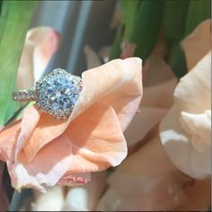 Peek-a-boo! I see you! 💍🌹💗 We can't wait to have this @verragio ring in our showroom! #verragio #rosegold #yaaas #dgellerandson #popthequestion #diamond #diamondsareagirlsbestfriend #yellowgold #diamonds #uniquebride #futuremrs #diamondring #engaged 💍 #WhereAtlantaGetsEngaged #unlikeanyotherring #summerlove #dreamring #rounddiamond #2ct #pavediamonds #theknotrings #haloring #sparkle #bling 💎