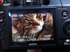 Cat - photography