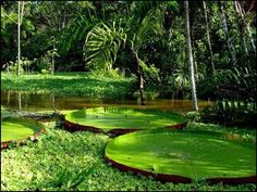 South America Adventure Travel - 20 Places To Visit Before You Die Images Jungle, Ecuador, The Places Youll Go, Places To See, Beautiful World, Beautiful Places, Les Continents, Amazon River, Amazon Rainforest