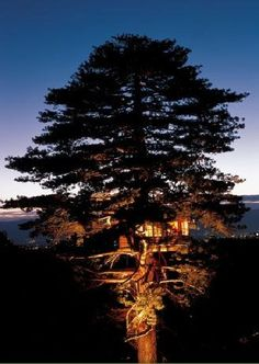 """French company La Cabane Perchee (""""cabins perched"""") designs, builds and installs beautiful treehouses such as those pictured above. Commissioned by private clients and resorts around the world, they have built over 120 custom cabins averaging 160-200 square feet, many with an added terrace of 110 square feet."""