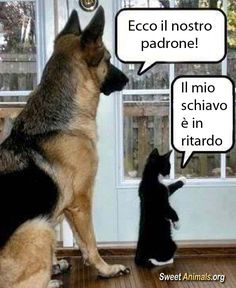 Best 50 funny cat vs dog memes images to prove whos boss humor Funny Animal Memes, Funny Cat Videos, Dog Memes, Cute Funny Animals, Funny Animal Pictures, Funny Dogs, Cute Cats, Funny Memes, Funny Twins