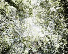 http://helsinkischool.fi/artists/santeri-tuori/portfolio/forest