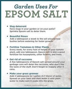 Top 10 Important Gardening Tips And Uses for Epsom salts Gardens