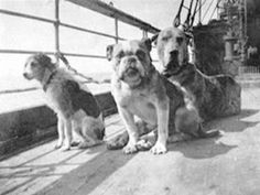 Dogs which survived the Titanic disaster. Twelve dogs were known to be aboard, and only these three survived. 1912