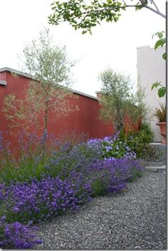 TD: Mediterranean Garden - bold colours, clear design, signature plants like lavender