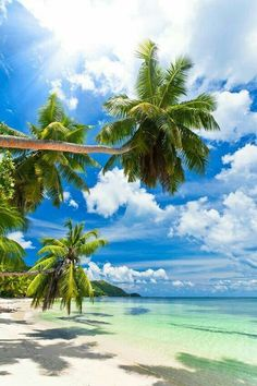 Tropical Beaches In California Beautiful Islands, Beautiful Beaches, Beautiful World, Wallpaper Paisajes, Les Seychelles, Seychelles Islands, Fiji Islands, Cook Islands, The Beach