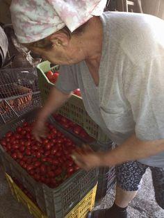 Nannina e il suo raccolto di pomodori San Marzano
