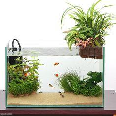 グラスガーデンN360 プランツアクアスタイル コリドラス&プラティフルセット 説明書付き 熱帯魚 水槽セット 飼育セット 本州四国限定