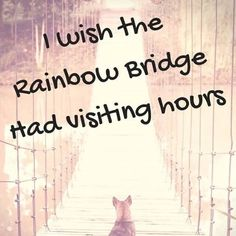 22 trendy Ideas for dogs love quotes rainbow bridge Yorkshire Terrier, Quotes Rainbow, I Love Dogs, Puppy Love, Animals And Pets, Cute Animals, Pet Loss Grief, Loss Of Dog, Motivacional Quotes