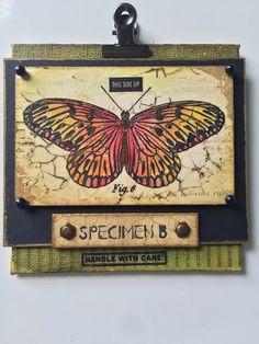 butterfly specimen...