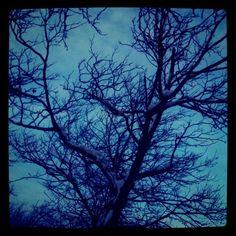 darkness of winter