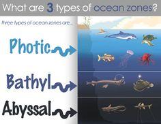 Classical Conversations: Cycle 1-Science Week 19 Ocean Zones