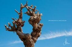 Türkei, Turkey, Titreyengöl, tree with sky scenery, photography by Jana Bath 2014, http://www.foto-bath.de