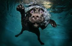 Puppies in the Pool | Divertente la nuova serie di scatti Little Friends che vede ...