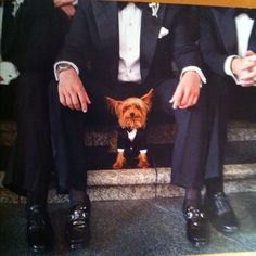 Wedding and Yorkie.
