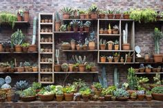 Wall of plant shelves done so nice