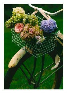 pretty vintage bike with basket of flowers. Old Bicycle, Old Bikes, Hortensia Hydrangea, Hydrangeas, Petal Pushers, Vintage Bikes, Flower Arrangements, Beautiful Flowers, Floral