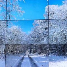 This is from 'The Four Seasons, Woldgate Wood' by British artist David Hockney's huge show now on at the National Gallery of Victoria. This immersive video work showcases the changing landscape of Hockney's native Yorkshire, each season was filmed with nine cameras mounted 3x3 layout record the scenery as driven through the woods. The 9 high definition screens deliberately are meant not to be in exact sequence.  |