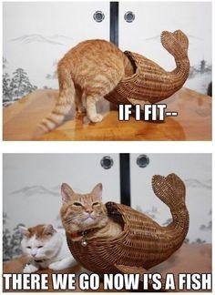 Cat Fish - www.meme-lol.com