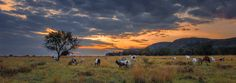 Autumn Nightfall by StormSignal  on 500px