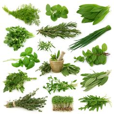 In an anti-inflammatory diet, we primarily move away from the overly processed, unbalanced diets of the West and toward the ancient eating patterns. Here are the best anti-inflammatory foods on the planet. Healing Herbs, Medicinal Plants, Natural Healing, Holistic Healing, Natural Home Remedies, Herbal Remedies, Health Remedies, Best Herbs To Grow, Anti Inflammatory Herbs