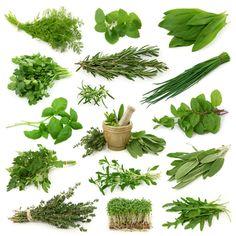 Un calendrier des saisons pour les herbes aromatiques pour savoir quand trouver ces herbes aromatiques fraîches.