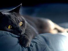tapety kot halloween - Szukaj w Google