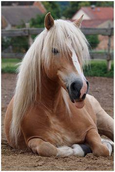 "- ok i'm adding ""pets"" - Pferde Pretty Horses, Horse Love, Beautiful Horses, Animals Beautiful, Horses And Dogs, Wild Horses, Animals And Pets, Cute Animals, Palomino"