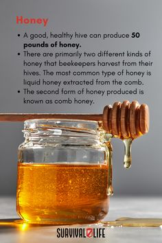 There's nothing like the sweetness of honey, and when SHTF you can sustain yourself with a supply of it. Beekeeping gives us many useful products and food, including honey and beeswax. Beeswax is used for both candles and soap, and honey has dozens of uses. #beekeeping #survivalskill #survivaltips #survivallife Survival Hacks, Survival Life, Survival Skills, Food Storage Organization, Food Storage Containers, Types Of Honey, Long Term Food Storage, Bee Pollen, Beekeeping
