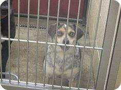 Pikeville, KY - Beagle Mix. Meet Ice, a dog for adoption. http://www.adoptapet.com/pet/11234015-pikeville-kentucky-beagle-mix