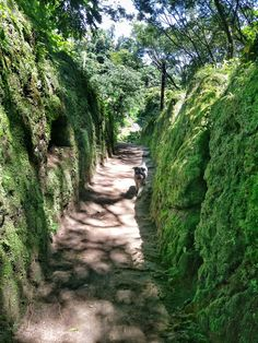 Siempre a mi lado. #Orizaba #PuebloMagico #Veracruz #nature #schnauzer #schnauzerlover #instanature #NatureLover #naturephotography  #ignature #instanature #greatoutdoors #outdoors #hiking #photographylovers #photooftheday #photography #pictureoftheday  #photographer #pictures #hdr #xperiaphotoacademy #vsco #vscocam #xperiaphotography #sonyxperiam5 #XperiaM5 #Xperia #InstateXperia #sonyXperia