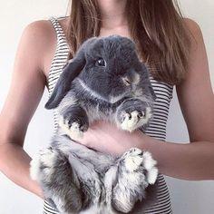 so cute bunny rabbit animal love Cute Baby Bunnies, Funny Bunnies, Cute Baby Animals, Animals And Pets, Funny Animals, Bunny Bunny, Funny Pets, Pet Bunny Rabbits, Grey Bunny