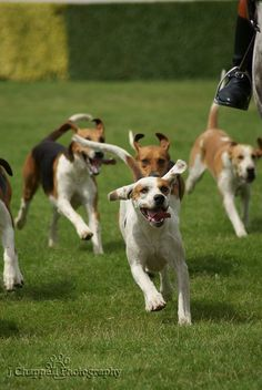 Look! There's Brianna, watch her run to play with the dogs, let's go....
