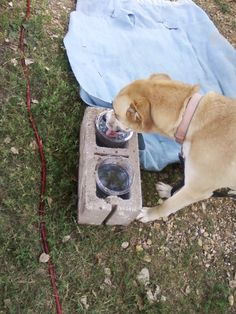 When camping with dogs of all sizes, we came up with a clever idea for non spill able water dishes...find  tall plastic containers that narrows at the bottom &  widens at the top, place the containers in the holes of a heavy concrete block. Then place it  in a shaded place & in an area at the end of their boundry or leashes so they cant get tangled up with it.