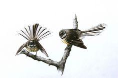 Bird Tattoos, Cool Tattoos, Tatoos, New Zealand Art, Nz Art, Kiwiana, Watercolor Sketch, Exotic Birds, Watercolours