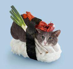 Neko Sushi - Os Sushis de gatos no Japão | Criatives | Blog Design, Inspirações, Tutoriais, Web Design