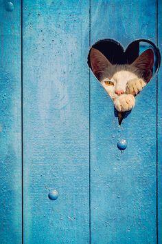 Delightfully Manic — only-cats-photos: Gatinha do coração...