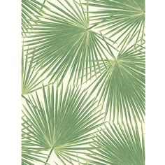 Aruba Wallpaper in Green from the Tortuga Collection by Seabrook... (745 MXN) ❤ liked on Polyvore featuring home, home decor, wallpaper, wallpaper samples, tropical leaves wallpaper, modern home accessories, stripe wallpaper, stripe pattern wallpaper and green home accessories