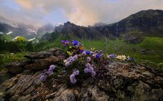 Spring alpine Photo by Giuseppe Rizza -- National Geographic Your Shot
