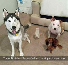 28 Funny Animal Pictures Of The Day #funny #picture