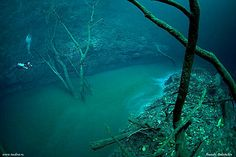 """This is the Cenote Angelita river in Mexico. Like many other rivers in the world, you can find trees & leaves along its banks. Notice that little guy to the left of the picture? That's a scuba diver. Because unlike other rivers, this one is underwater. The """"river"""" is made of  a layer of hydrogen sulfide which separates a layer of salt water below from a layer of fresh water above. The river was discovered by divers who entered the 200 ft deep Cenote Angelita cave in Mexico."""