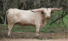 Eldorado Texa 270