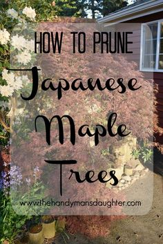 Keep The Delicate Shape Of Your Japanese Maple With These Handy Pruning Tips How To Prune Japanese Maple Trees Pruning Weeping Trees Gardening Pruning Trim Trees Spring Pruning Garden Trees, Trees To Plant, How To Prune Trees, Backyard Trees, Backyard Plan, Bonsai Trees, Flowers Garden, Fruit Trees, Garden Plants