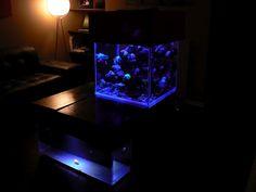 A really cool Salt water fish tank blog. Cool pics.