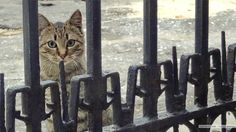 Random Odessa cat picture: suspicious cat patiently tracks my moves behind the gate.