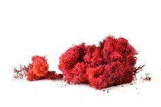 Varie - Muschio Finlandese Lichene Rosso Gr.200 - un prodotto unico di raffasupplies su DaWanda