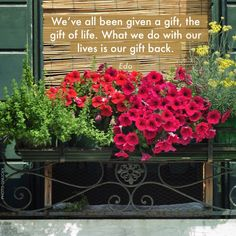 """This poster was created with Life is Beautiful app - https://itunes.apple.com/us/app/life-is-beautiful-get-daily/id607999197?ls=1&mt=8 Quote: We've all been given a gift, the gift of life. What we do with our lives is our gift back."""" Photo by: Gnuckx"""
