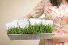 You can use wheat grass for so many things at parties and events. In this article for Project Wedding I show how to grow wheat grass and us. Wedding Book, Diy Wedding, Wedding Flowers, Wedding Ideas, Party Wedding, Wedding Bells, Grass Centerpiece, Faux Grass, Seating Cards